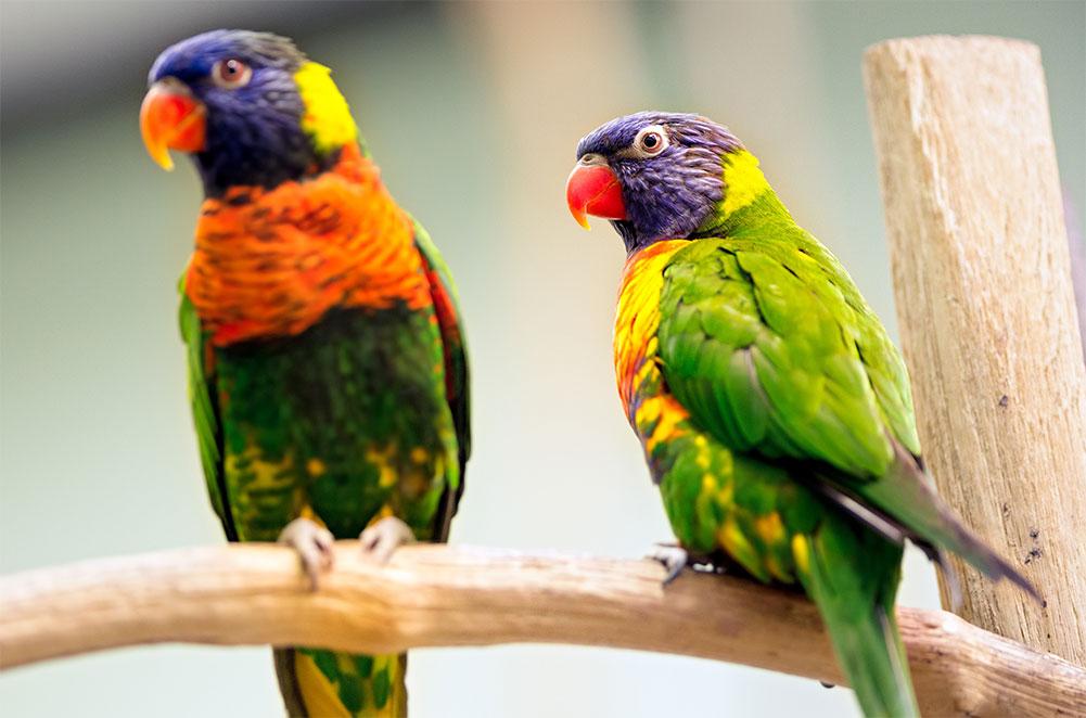 Oiseaux animalerie for Animalerie poisson